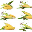 Corn ripe and sweet — Stock Photo