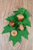 Zelený list s žaludy na dřevěné pozadí — Stock fotografie