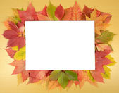 Autumn leaves and sheet of paper — Stock Photo