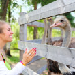 Girl communicating to an ostrich - Stock Photo