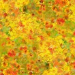 Helenium flowers background — Stockfoto