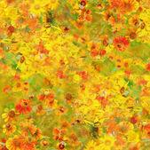 Helenium flowers background — Stock Photo