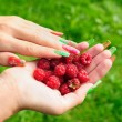 Ripe raspberry — Stock Photo