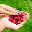 Ripe raspberry — Stock Photo #7344533