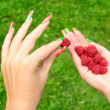 Pick a raspberry — Stock Photo #7344537
