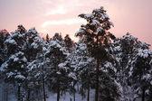 冬の日の出 — ストック写真