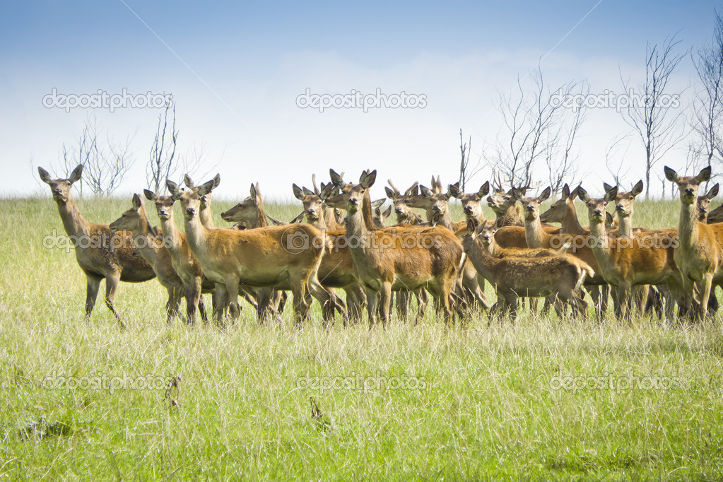 An image of some nice wild deer — Stock Photo #6900333