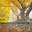Yellow autumn forest — Stock Photo #7437779