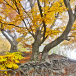 Yellow autumn forest — Stock Photo