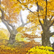 Yellow autumn forest — Stock Photo #7458042