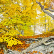 Yellow autumn forest — Photo
