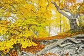 żółty jesień las — Zdjęcie stockowe