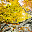 Yellow autumn forest — Stock Photo #7480447
