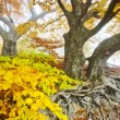 Yellow autumn forest — Stock Photo #7551305