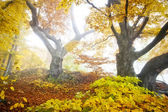 Yellow autumn forest — Stock Photo