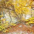Yellow autumn forest — Stock Photo #7577522