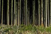 Dark black forest — Stock Photo