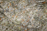 Old stone lichen background — Stock Photo