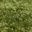 Stock Photo: Grass close up