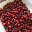 Stock Photo: Lingonberries