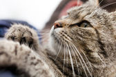 Cat close up — Stock Photo