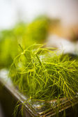 Dill weed — Stockfoto