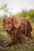 Dog in nature — Stock Photo