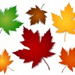Maple leaves fall color options — Stock Vector