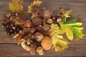 Fruit of autumn — Stock Photo