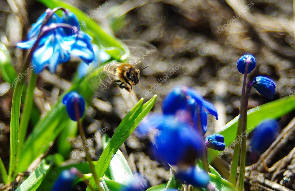 五彩��f�x�_饿了蜜蜂苍蝇之间五彩缤纷的花朵– 图库图片