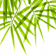 Royalty-Free Stock Photo: Bamboo leaves