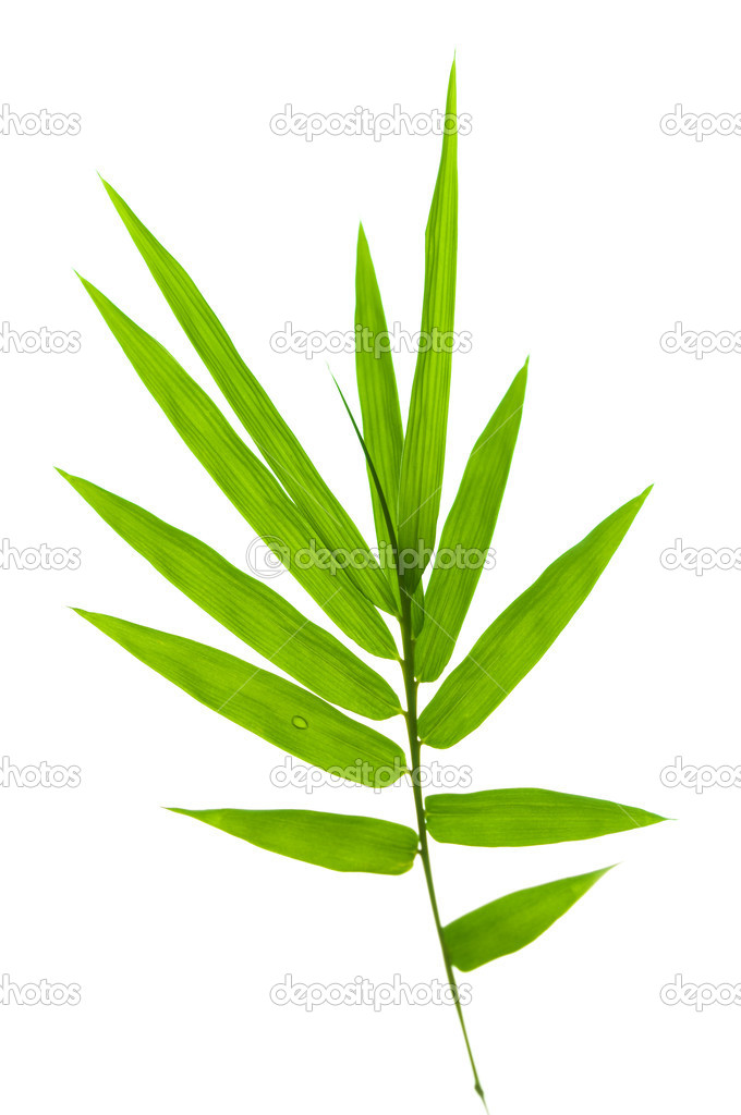 Bamboo leaves on white background — Stock Photo #7065485