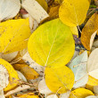 Background of yellow and dry autumn leaves. — Stock Photo