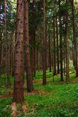 Dark forest — Stock Photo