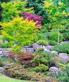 Japan garden — Stock Photo