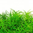 Grass bush — Stock Photo