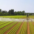 Panoramic irrigation field — Stock Photo