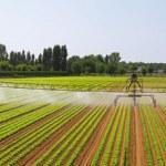 Panoramic irrigation field — Stock Photo