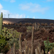 Jardin De Cactus, Lanzarote — Stock Photo