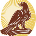 Eagle perching on branch sunburst — Stock Photo #6976873