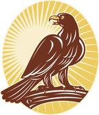 Eagle perching on branch sunburst — Stock Photo