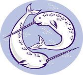 Narwhal Monodon monoceros unicorn whale — Stock Photo