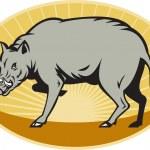 ������, ������: Babirusa wild pig attack