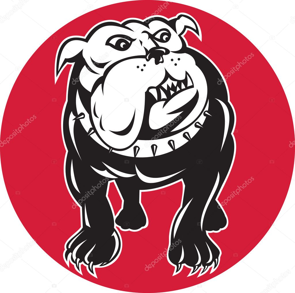 Illustration of a bulldog mongrel dog facing front with spike collar set inside circle on isolated background  Stock Photo #7929919