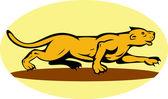 Puma or mountain lion prowling — Stock Photo