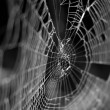 Spider Web - Stock Photo