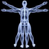 vitruvian man under X-rays. isolated on black. — Stock Photo