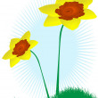 Stock Vector: Daffodils in green grass-vectors illustration