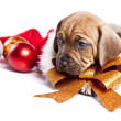 Happy christmas dog! — Stock Photo