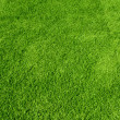 Green grass texture — Foto Stock